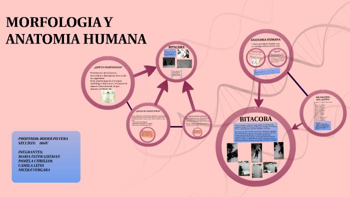 Morfologia Y Anatomia Humana By Jan Fernandez On Prezi