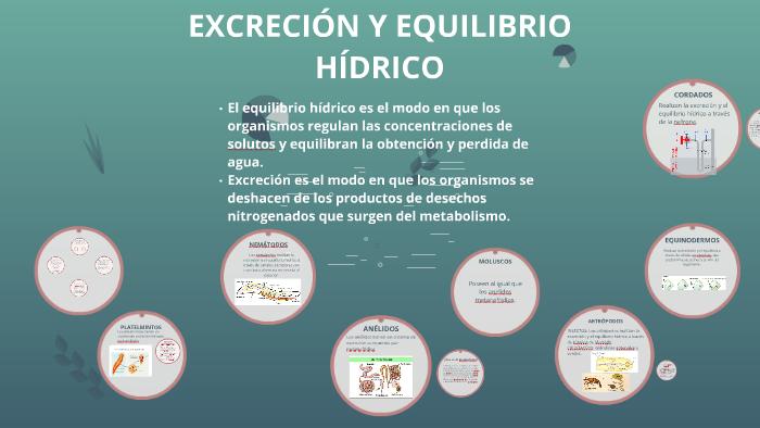 EXCRECIÓN Y EQUILIBRIO HÍDRICO by milagros cristofolini