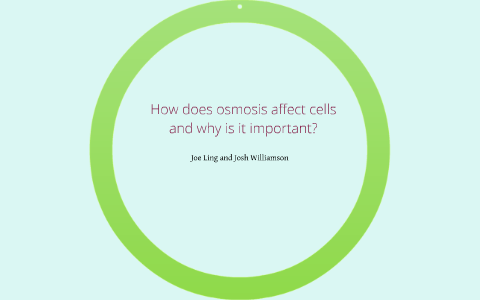 why is osmosis important to cells