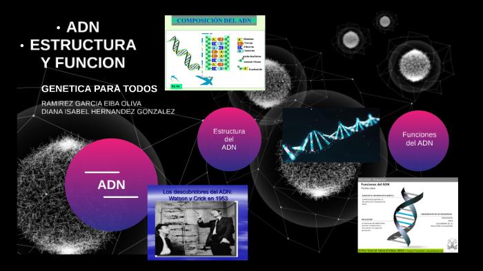 Adn Estructura Y Función By Diana Hernandez On Prezi Next