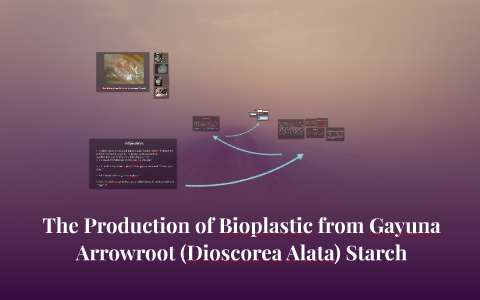 The Production of Bioplastic from Gayuna Arrowroot (Dioscore