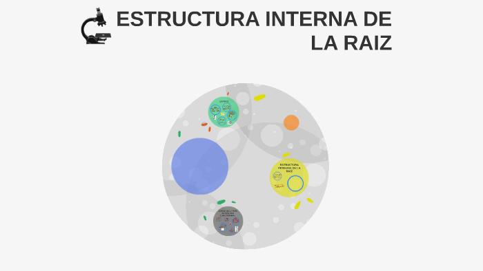 Estructura Interna De La Raiz By Vladimir Albujar On Prezi