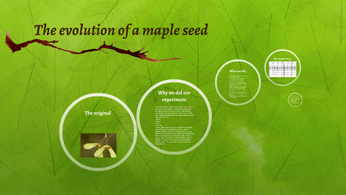 The evolution of a maple seed by Faris Hossam on Prezi