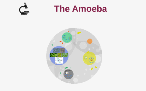 The Ameoba by Tierany H  on Prezi
