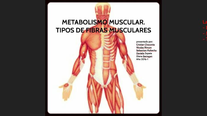 Metabolismo basale seguir en este camino