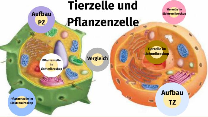 Pflanzliche zelle aufbau