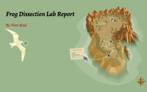 kidney dissection lab report conclusion