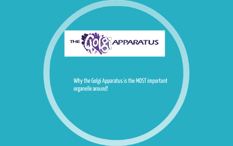 why is golgi apparatus important