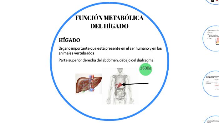 FUNCIÓN METABÓLICA DEL HÍGADO by Chari Reyes Ruiz