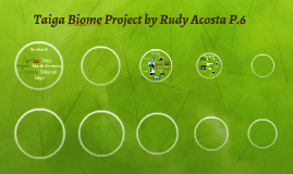 Taiga Biome Project by Rudy Acosta P.6