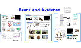 Q3 NBO 9: Bears and Evidence