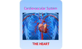 THE HEART- basic intro