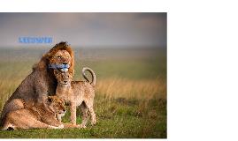 Hoe ziet een leeuw eruit?