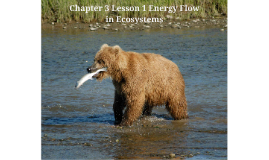 Chapter 3 Lesson 1 Energy Flow in Ecosystems