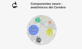 Componentes neuro -anatómicos