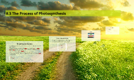 8.3 The Process of Photosynthesis