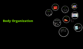 Copy of Body Organization 22.1