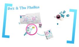 Sex & The Phallus