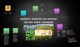 MICROBIAL GENOMICS AND BIOFUELS FOR NEW ENERGY RESOURCES