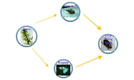 Aquarium Food Web