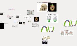 Day 137b - Evidence for Human Evolution (Lab)