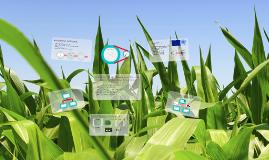 Biofuels Sustainability