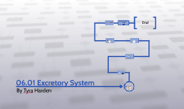 Copy of 06.01 Excretory System assessment.