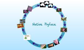 Native Pigface......oral report