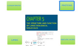 CHAPTER 5: THE STRUCTURE AND FUNCTION OF LARGE BIOLOGICAL MO