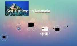 Sea Turtles:  In Newsela