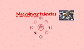 Copy of Macroinvertebrates