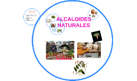 Copy of ALCALOIDES NATURALES