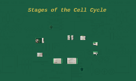 Stages of the Cell Cycle