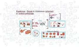 Pankreas - Dalak & Abdomen arterleri-dr.nes