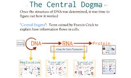 Bio- Molecular Genetics 2:  The Central Dogma