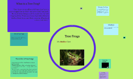 Copy of Tree Frogs