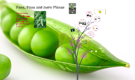 Copy of All About Pea Plants