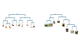 Dichotomous Key Examples For Dog Breeds