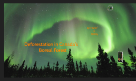 Deforestation in Canada's Boreal Forest