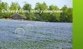 Cultivo del lino, textil y oleaginoso.