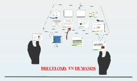 BRUCELOSIS  EN HUMANOS