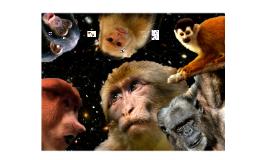 Expresiones faciales de primates