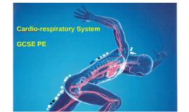 Edexcel - Cardiovascular System