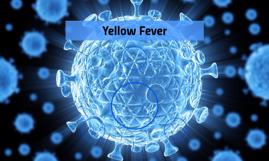 Yellow Fever