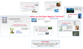 Copy of What are the Basic Needs of Animals?