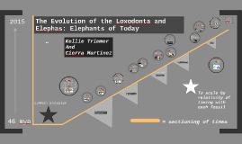 Evolutionary Timeline: Elephant
