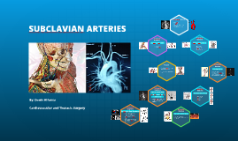 Subclavian Arteries