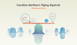 Carolina Northern Flying Squirell