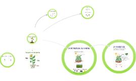 Tema 5: Conoce las plantas