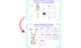 Copy of Structure and Function of the Skeletal System
